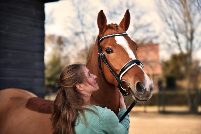 Portet van paard en amazone