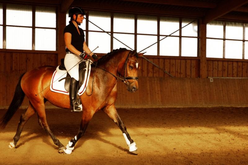 Draf foto pony