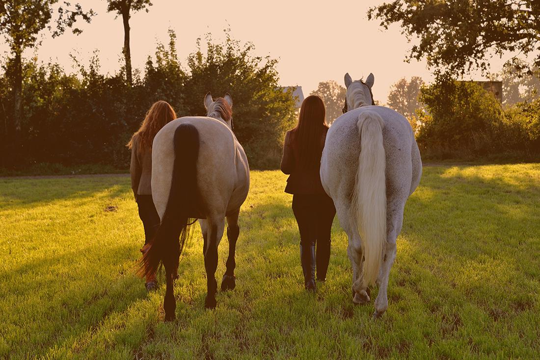 Sfeerbeeld met paarden.