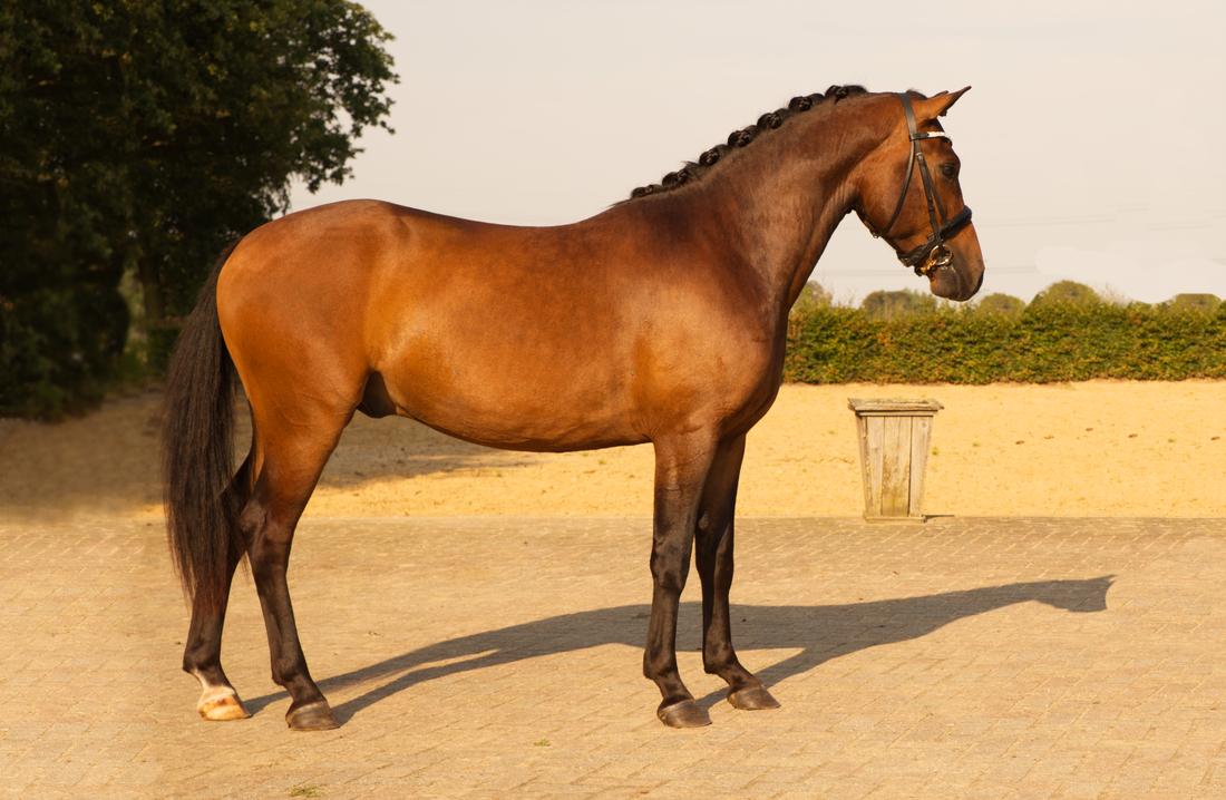 Verkoopfoto van een pony of paard, foto voor een verkoop advertentie.