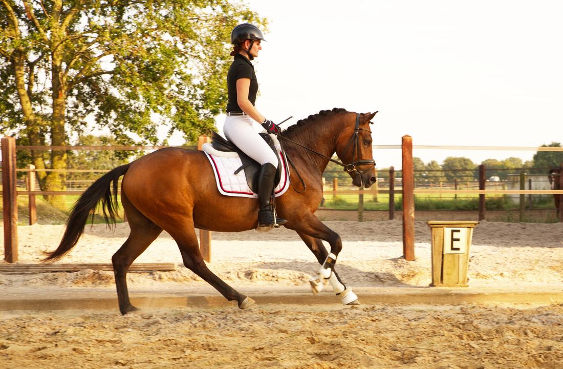 Amazone en haar paard in galop, voor het maken van foto's voor de verkoop van het paard in Limburg.